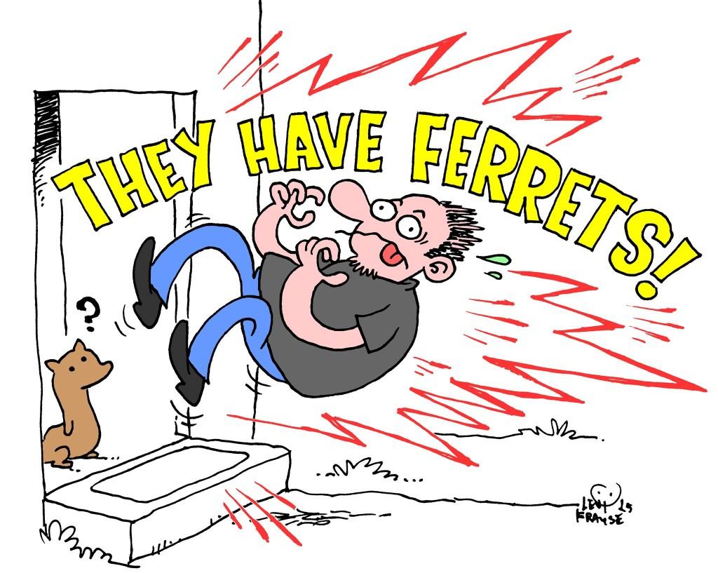 ferrets - levi